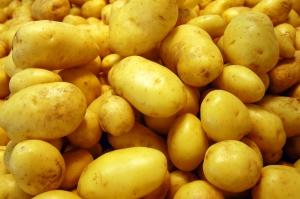 cultivo-patata-regaber-01.jpg