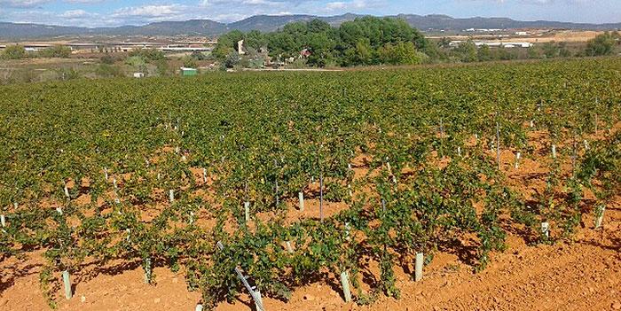 1511Regaber Referencias CRSanAntonio Requena Vina 05