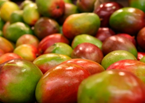 1607Regaber Cultivos Frutales Mango 02