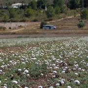 1703Regaber Referencias Agricultura YeclaMurcia Aromaticas 01
