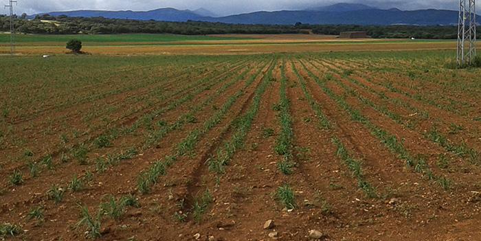 1709Regaber Referencias Agricultura Rioja Tomate 01