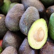 1809Regaber Noticias Cómo cultivar aguacate