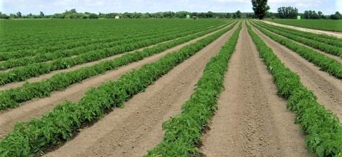 regaber-agricultura